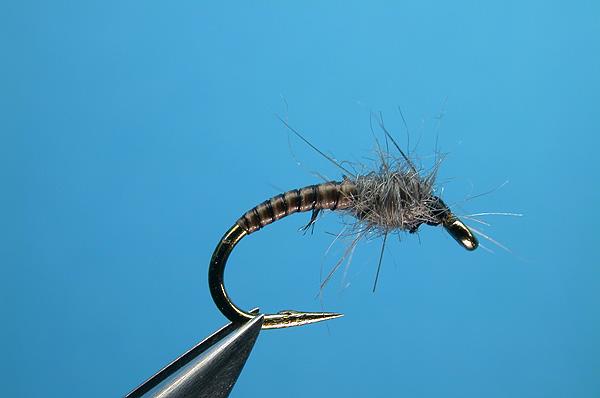 Midge Larva Fly   www.pixshark.com - Images Galleries With ...